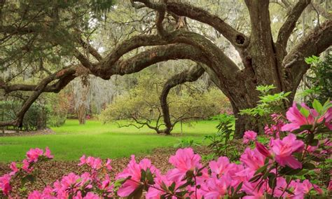 Magnolia Garden by Plantation Admission And Tours Magnolia Plantation Gardens Groupon