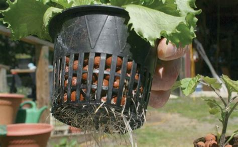backyard hydroponics system take it outside why outdoor hydroponic systems make sense