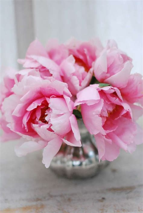 peonie in vaso fiori per la nascita foto 3 40 mamma