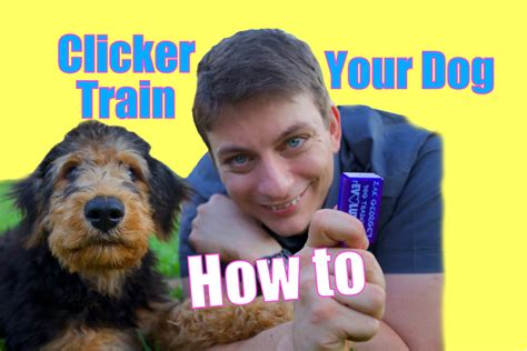 how to your with a clicker how to potty your puppy the clicker way breeds picture