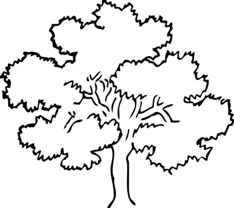 coloring page of oak tree oak tree coloring page clipart best