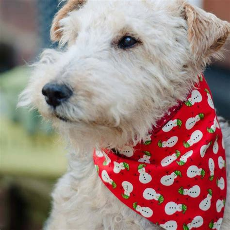 bandanas for dogs bandanas by redhound for dogs notonthehighstreet