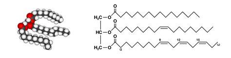 lipidi alimenti lipidi chimica dell alimentazione e consigli project