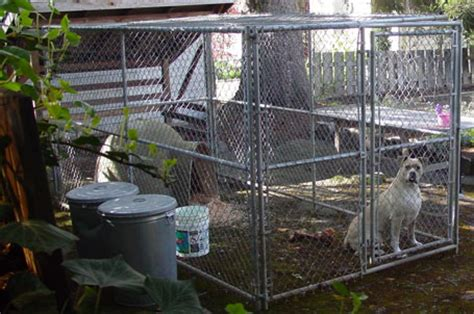 cages for puppies pin cages for sale collars and supplies pictures on