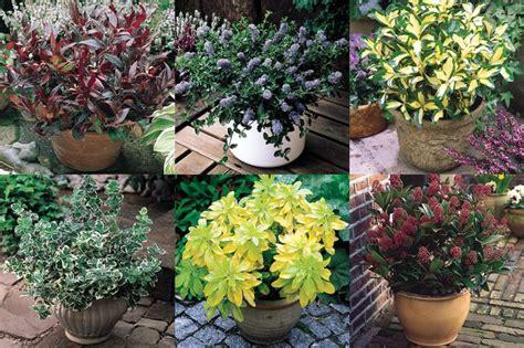 brighten   garden  spring  great deals