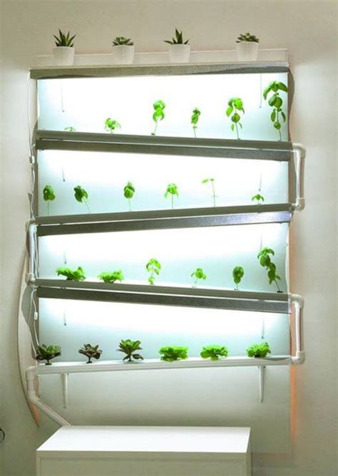 healthy life  hydroponics indoor ideas