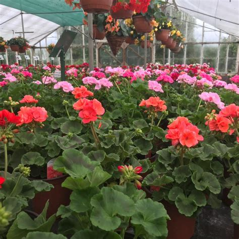 kemps plants garden center bristol united kingdom