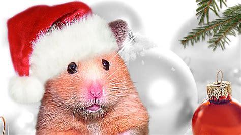 christmas hamster baking cookies  emma  hamster weihnachtsplaetzchen  mas nom nom youtube
