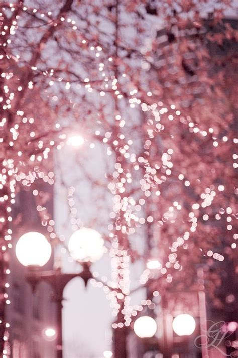 beautiful pink tree lights 169 georgianna lane photography