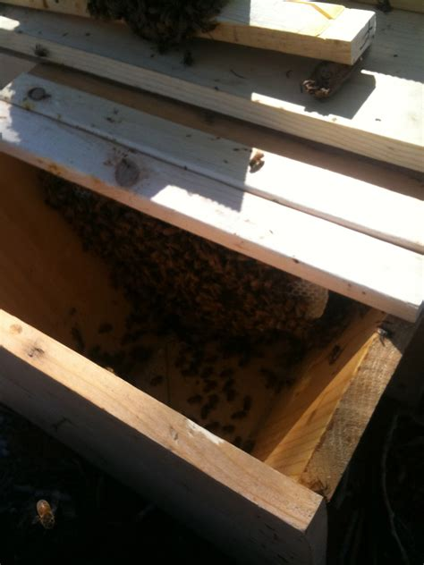 Top Bar Bee Hives For Sale by Top Bar Hive For Sale And Quite The Rage Apis Hive