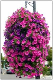 Artificial Plants For Window Boxes - great trailing plants for containers gardening