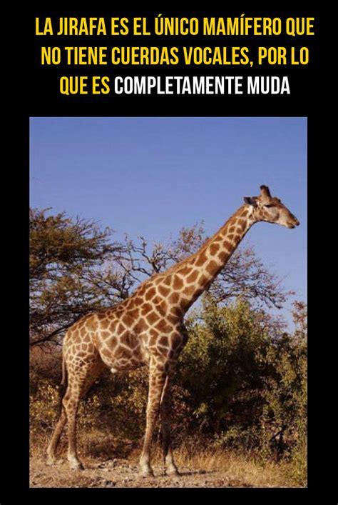 imagenes interesantes de animales galer 237 a 15 curiosidades del reino animal que