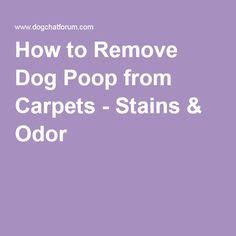 how to get poop smell out of couch 1000 ideas about remove dog odor on pinterest dog urine
