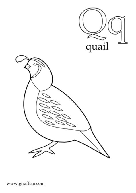free coloring pages quail quail coloring pages for preschool preschool and