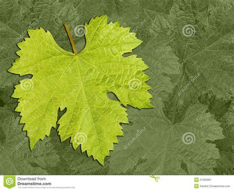 leaf pattern vine vine leaf pattern background stock image image 21020961