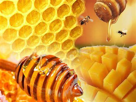 Hiu Madu Ibu Untuk Nutrisi Ibu Dan Janin ibu lebih baik minum madu