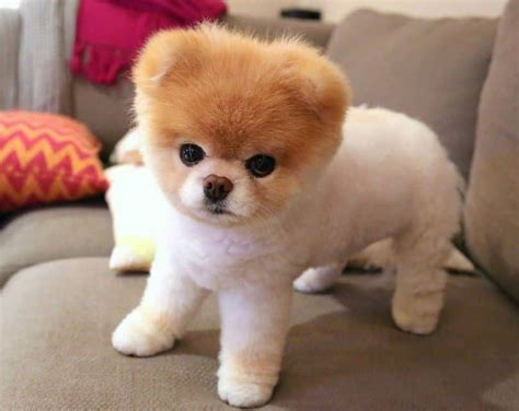 the cutest dogs in the world cutest breeds adorable things to enjoy
