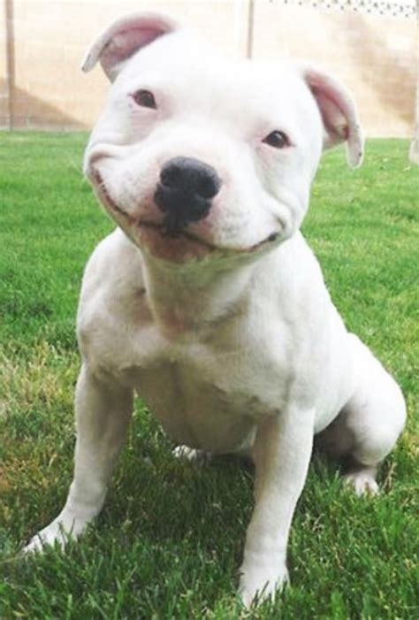 puppy smiling dogs smiling www pixshark images galleries with a bite