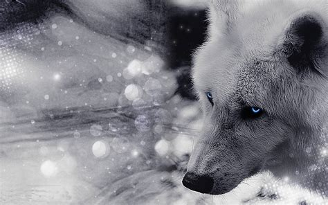 white wolf wallpapers wallpaper cave free wallpapers wolves wallpaper cave
