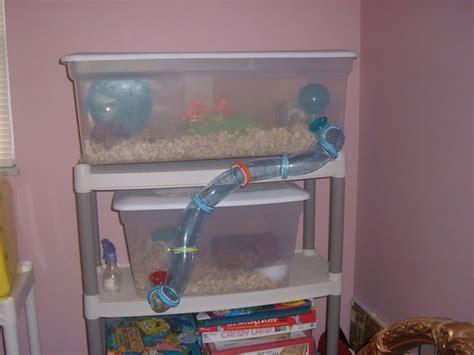 diy bin hamster cage hamster bin cage animals