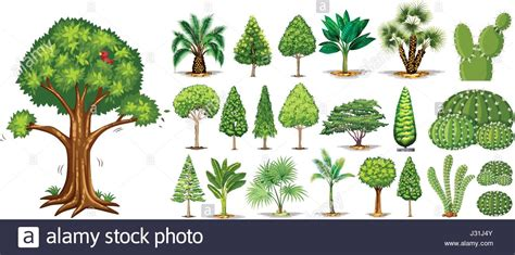 type of tree different types of trees illustration stock vector art