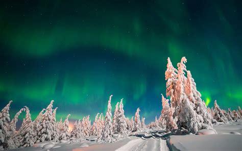 wallpaper aurora borealis winter forest snow  nature