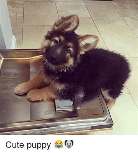 Cute Puppy Meme - 25 best memes about cute puppies cute puppies memes