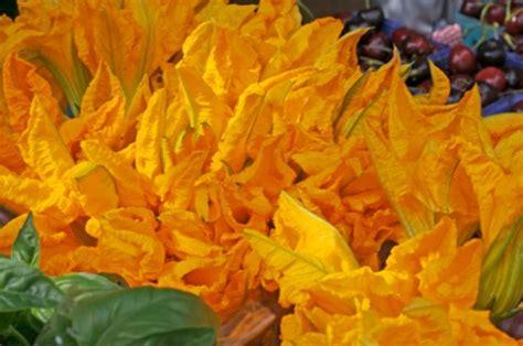 fiori di zucca coltivazione fiori di zucca tipologia ed uso pollicegreen