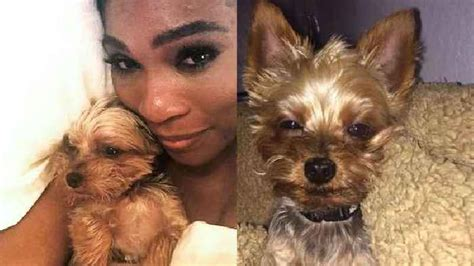 Serena Williams Pooch On The Mound by Serena Williams Eats Food One News Page Us