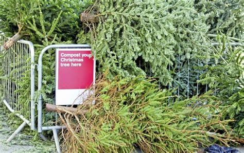 christmas tree recycling south dublin photo album best
