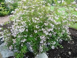 deer resistant plants deer resistant plants cultivate garden gift