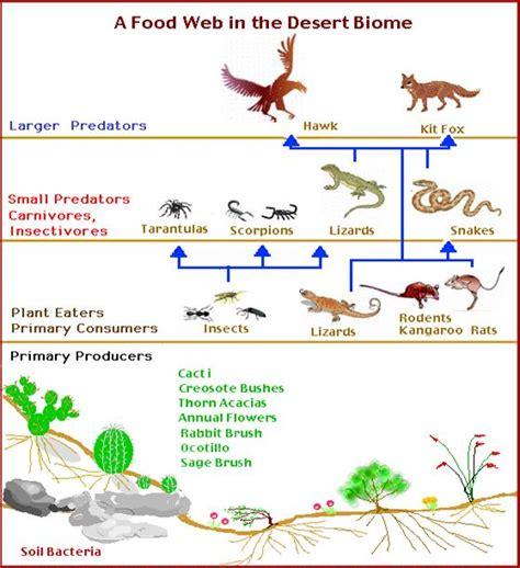 food web creator food web exle the desert biome
