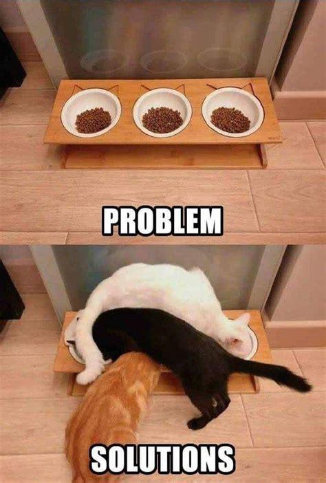 cats problem solving techniques funny animal jokes