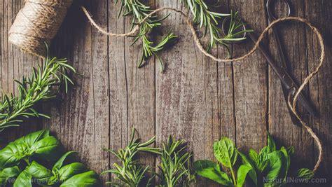 traditional plants  ecuador   herbal medicine