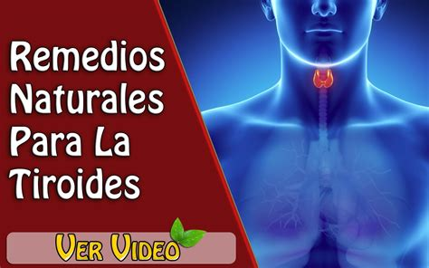 alimentos para la tiroides 4 remedios naturales para la tiroides salud
