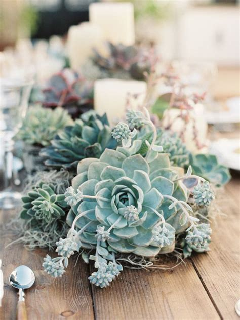 Best 25  Succulent centerpieces ideas on Pinterest