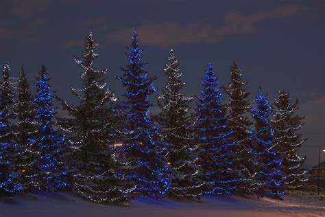 christmas tree decorating service calgary