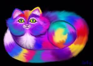 colored cat rainbow colored cat nick gustafson digital