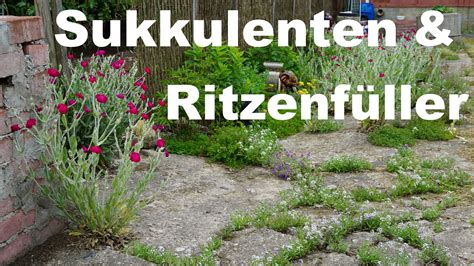 Sukkulenten Garten by Rundgang Durch Den Garten Sukkulenten Und Ritzenf 252 Ller