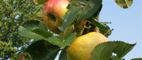 Bio Di Indo milus succo di mele bio gelindo dei magredi