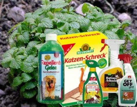 Verpiss Dich Pflanze Kaufen 3259 by Katzen Fernhalten Die Besten Methoden Um Katzen Fernzuhalten