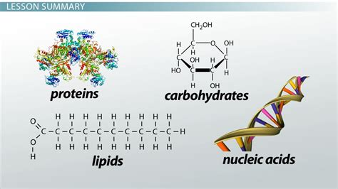 carbohydrates use in living organisms what elements make up carbohydrates lipids proteins and