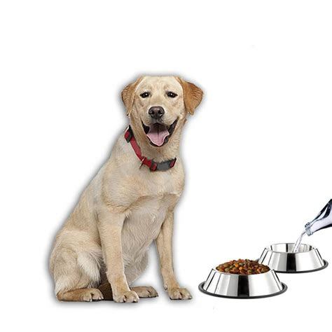 dog wont eat out of bowl the best dog bowls for all situations reviews