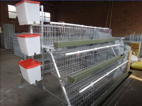 poultry farming business plan cages equipment and birds