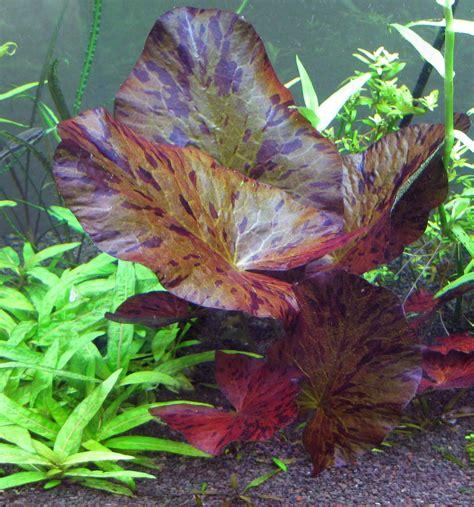 gsas annual plant auction november 11th club societies