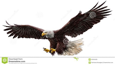 eagles colors bald eagle fly color vector stock vector illustration
