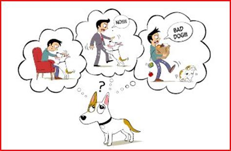 how do dogs communicate san francisco trainer dan perata san francisco trainer