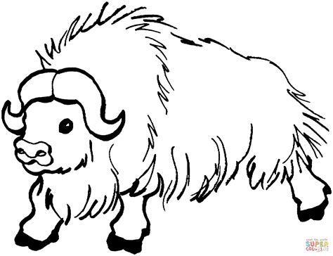 Free Coloring Pages Yak | wild yak coloring page free printable coloring pages