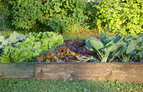 How To Start A Vegetable Garden Harvest To Table Starting Vegetable Garden