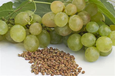 best grape seed fabulous uses and benefits of grape seed for the skin